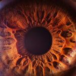 cornee_oeil_vision