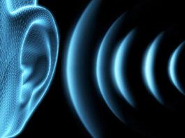 ondes sonores Echolocation